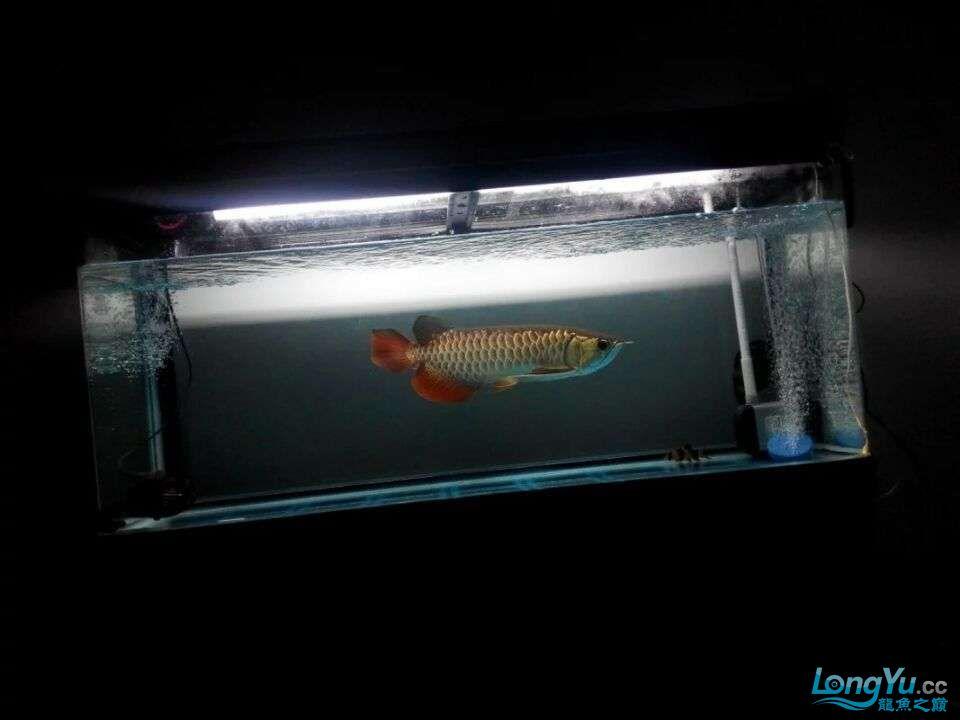 2年中的各种状态 哈尔滨龙鱼论坛 哈尔滨龙鱼第2张
