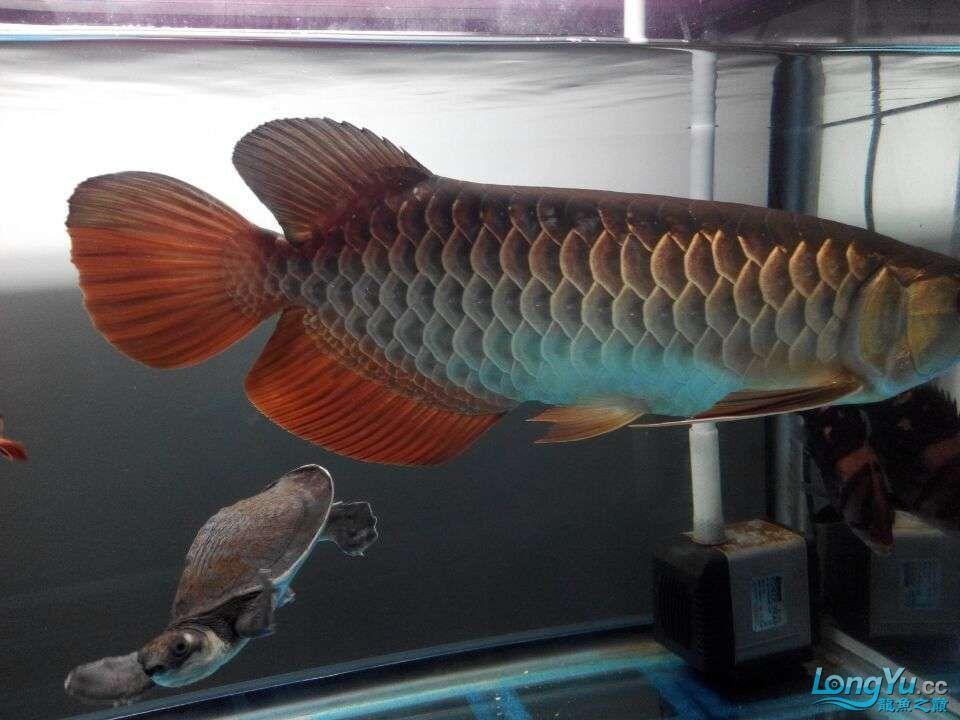 2年中的各种状态 哈尔滨龙鱼论坛 哈尔滨龙鱼第9张
