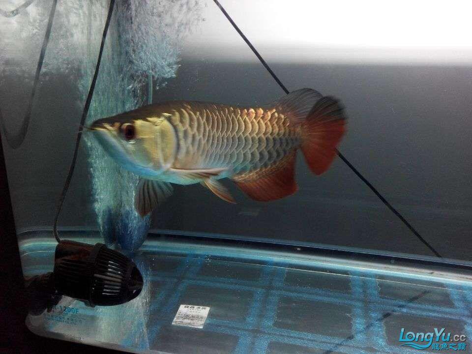 2年中的各种状态 哈尔滨龙鱼论坛 哈尔滨龙鱼第11张