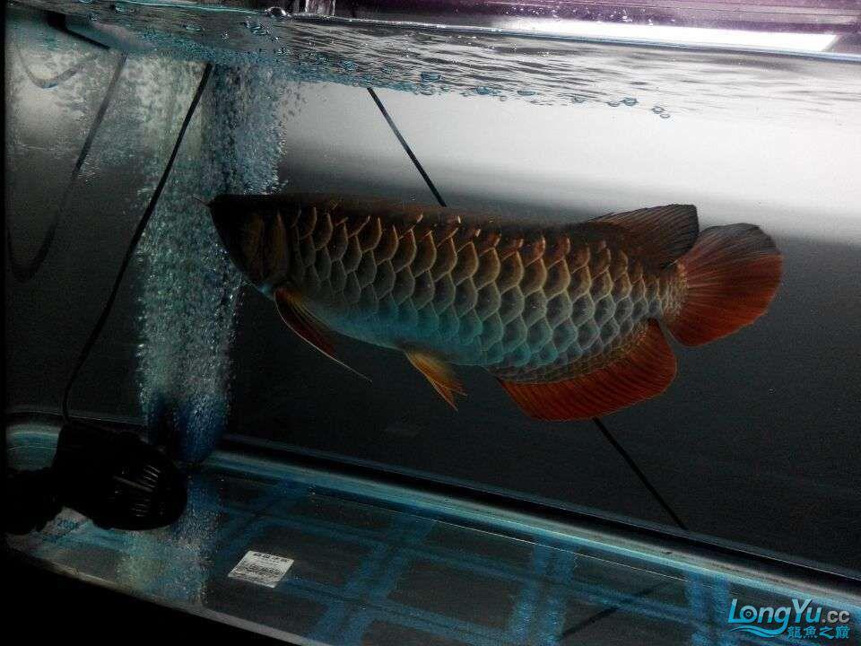 2年中的各种状态 哈尔滨龙鱼论坛 哈尔滨龙鱼第4张
