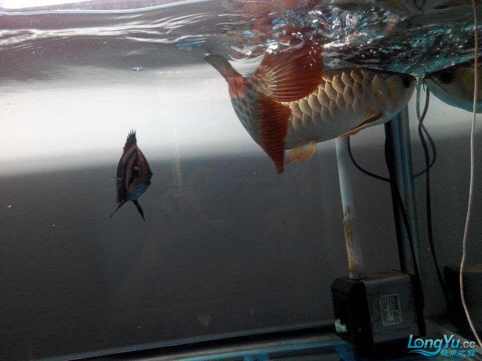 2年中的各种状态 哈尔滨龙鱼论坛 哈尔滨龙鱼第5张