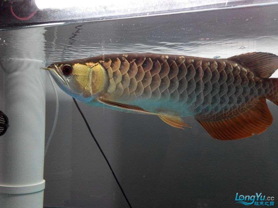 2年中的各种状态 哈尔滨龙鱼论坛 哈尔滨龙鱼第7张