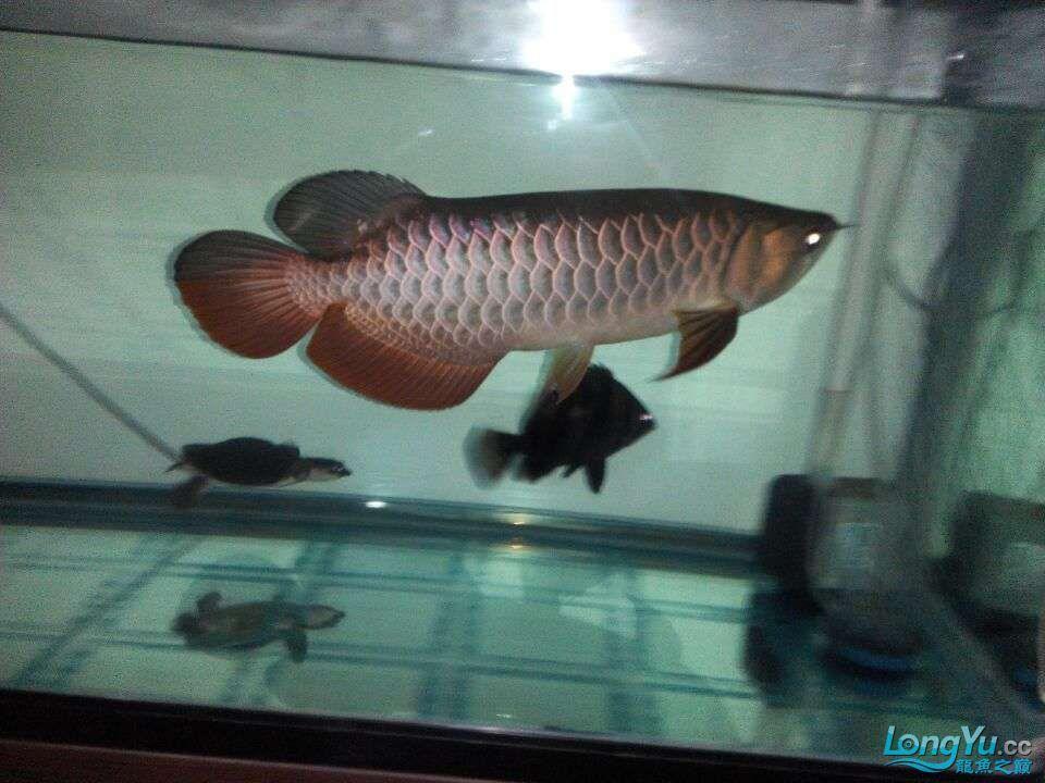 2年中的各种状态 哈尔滨龙鱼论坛 哈尔滨龙鱼第12张