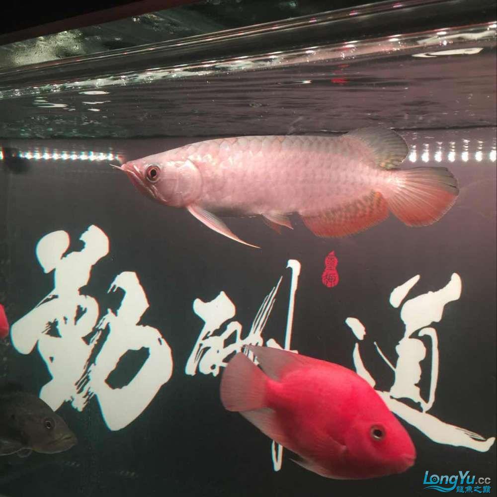 未命名 哈尔滨水族批发市场 哈尔滨龙鱼第2张