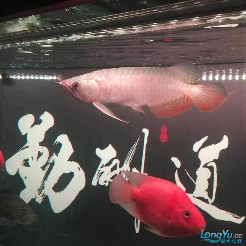 未命名 哈尔滨水族批发市场 哈尔滨龙鱼第6张