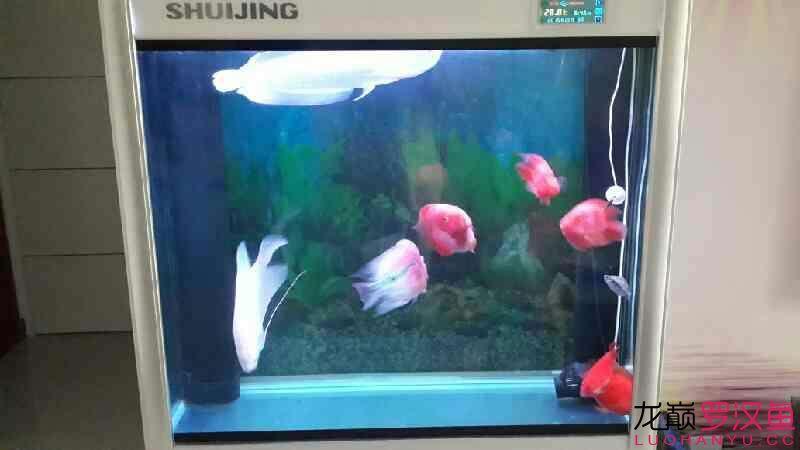 高手给帮忙看看 自己会好吗?怎么治疗哈尔滨财神鹦鹉-红财神价格 哈尔滨龙鱼论坛 哈尔滨龙鱼第8张