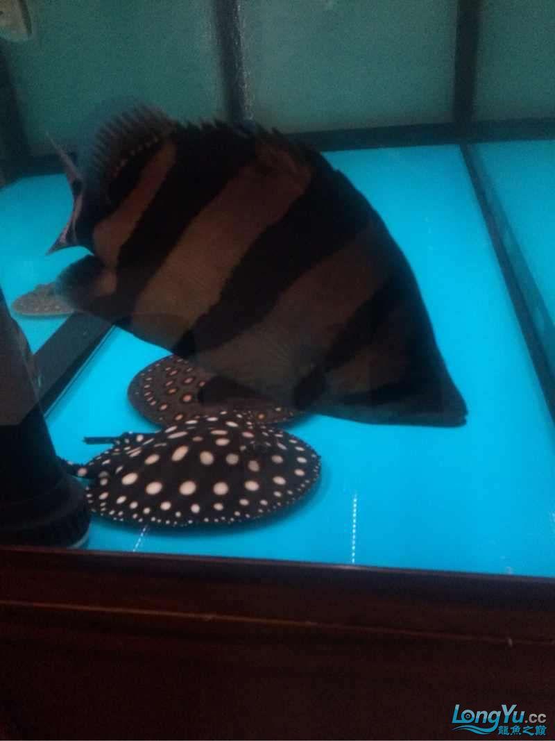 潜水2年,今天把自己的垃圾鱼拿出来晒晒。不喜别喷