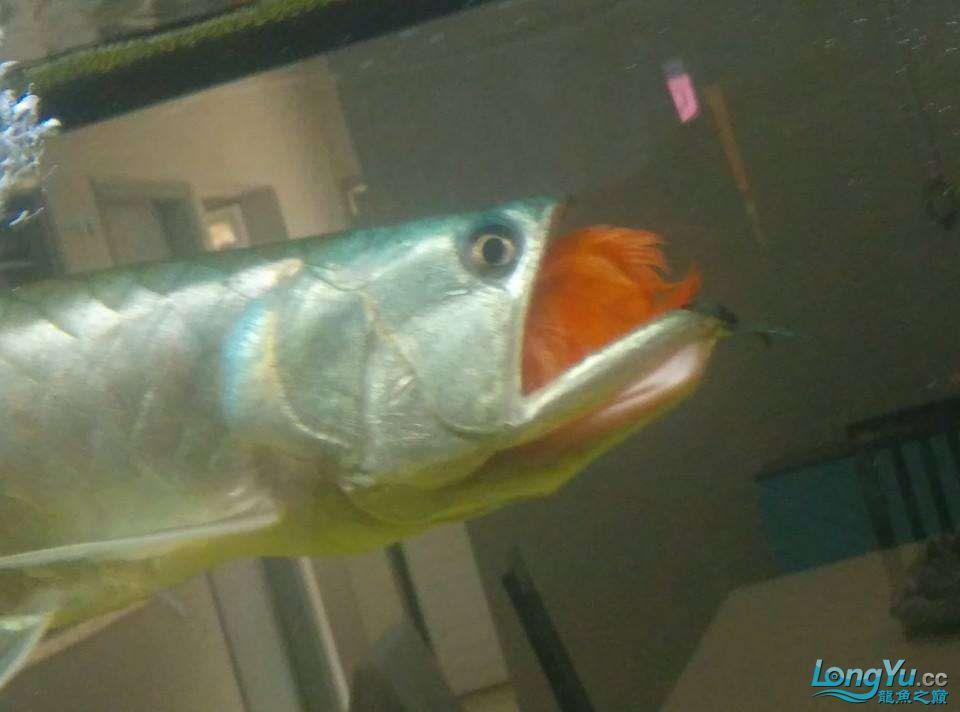 太福州宠物水族用品展不可思议了,如果不是亲眼所见,你能相信吗? 福州观赏鱼 福州龙鱼第3张
