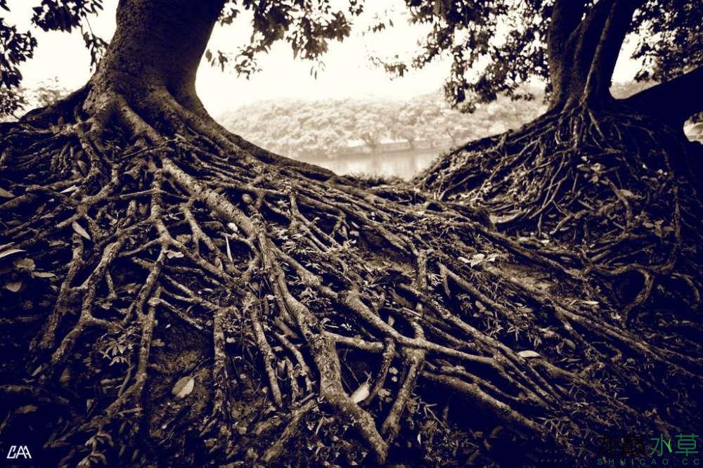 树根图.jpg
