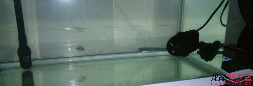 乌鲁木齐市鱼缸定制小小罗来跟大家见面咯 乌鲁木齐水族批发市场 乌鲁木齐龙鱼第3张