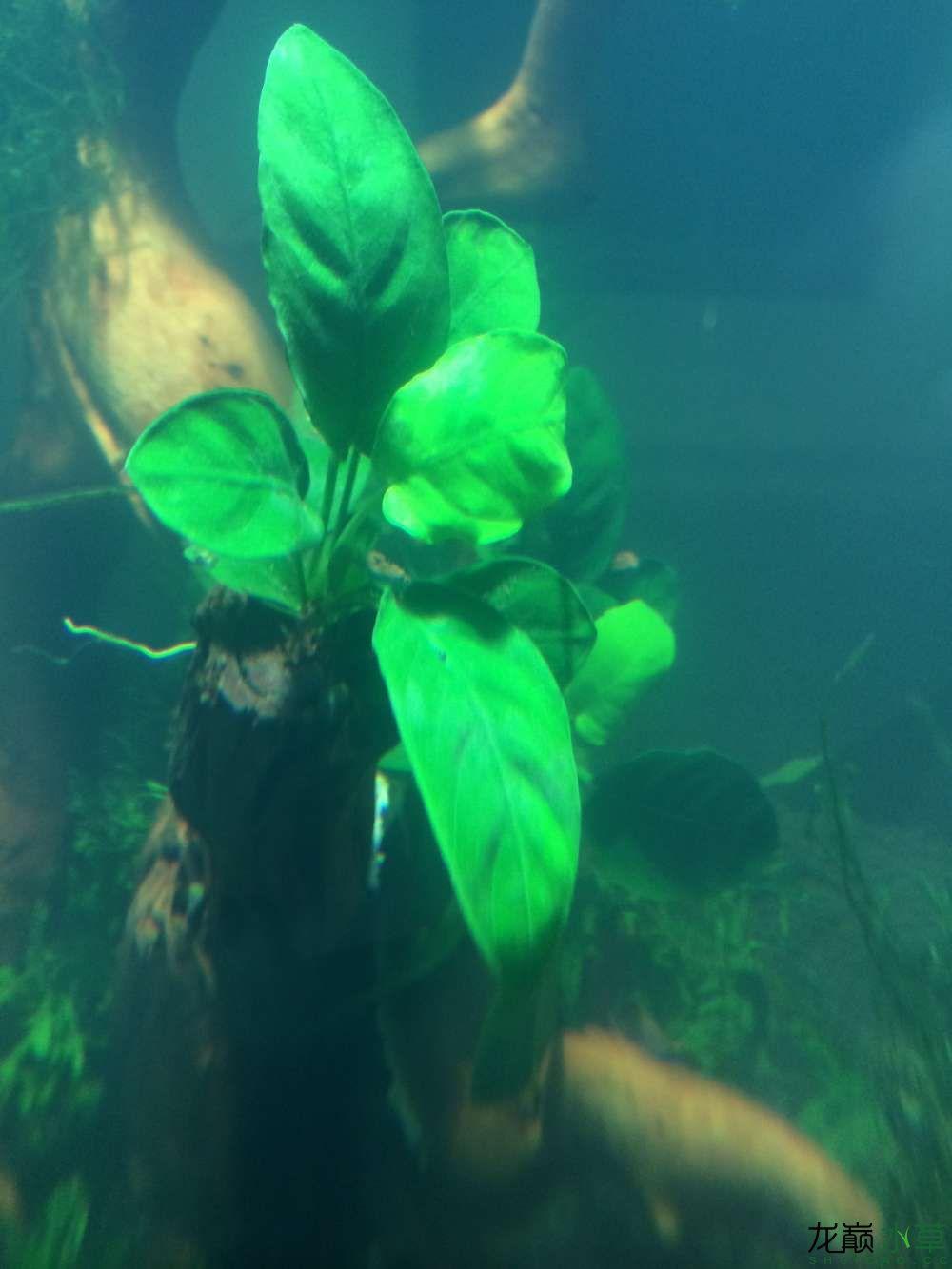 这几种水草都叫什么啊?搭配吗? 乌鲁木齐水族批发市场 乌鲁木齐龙鱼第5张