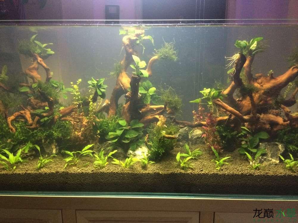 这几种水草都叫什么啊?搭配吗? 乌鲁木齐水族批发市场 乌鲁木齐龙鱼第6张