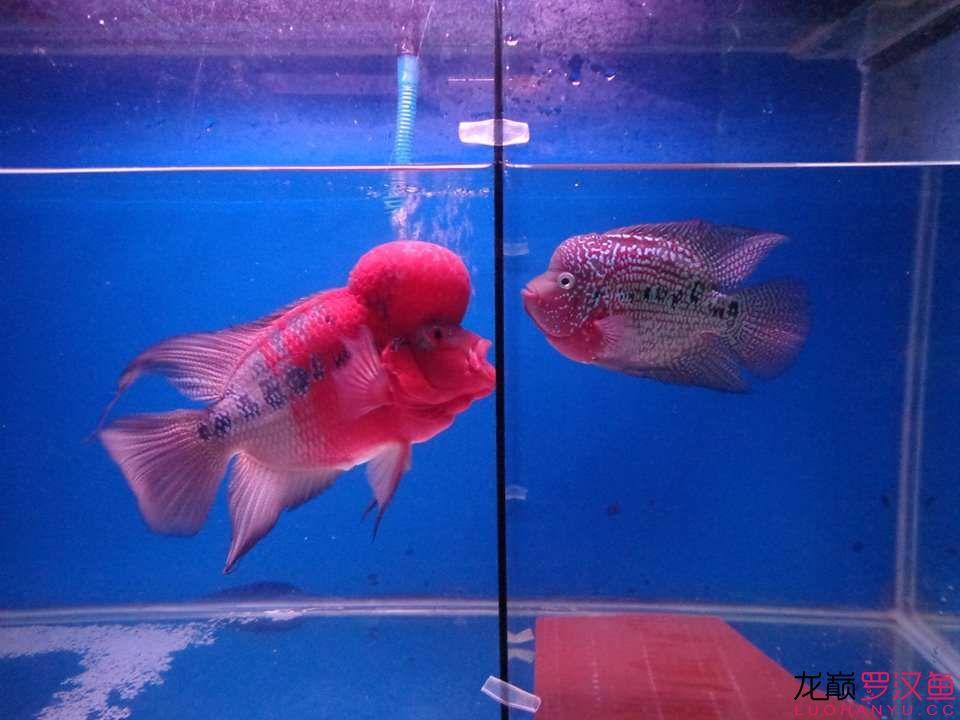 感情不错的样子,期待小鱼的诞生!