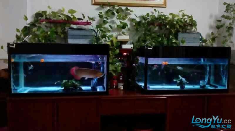 兰州观赏鱼专用药[我要申请池小绵羊增氧泵]十我的鱼缸