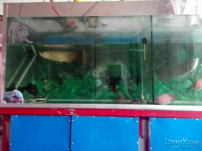 我要申请小气泵 兰州水族批发市场 兰州龙鱼第4张