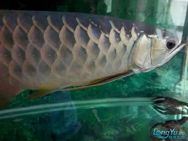 我要申请小气泵 兰州水族批发市场 兰州龙鱼第2张