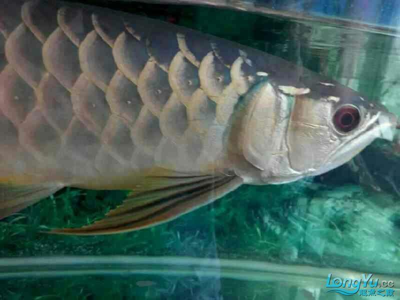 我要申请小气泵 兰州水族批发市场 兰州龙鱼第3张
