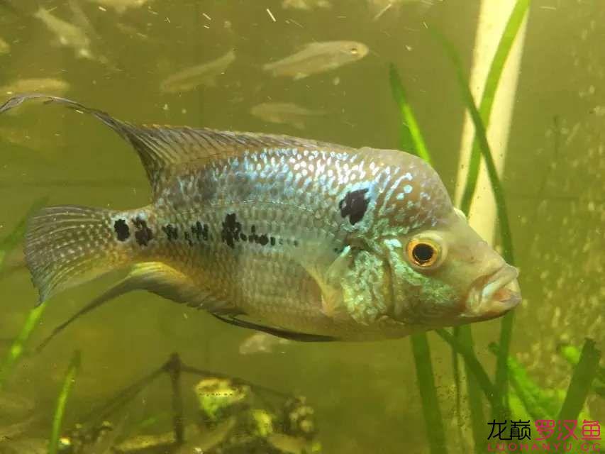 这鱼有没起大头的可能呢!!!