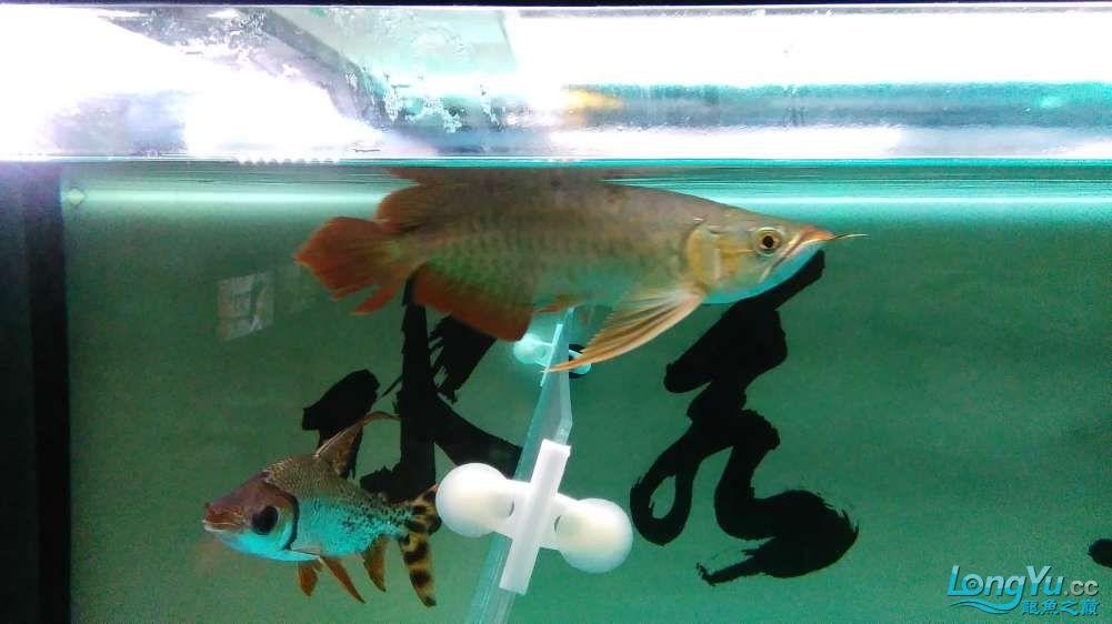 西宁最大的水产市场混养的乐趣 西宁龙鱼论坛 西宁龙鱼第1张