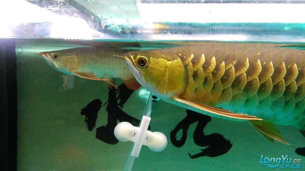 西宁最大的水产市场混养的乐趣 西宁龙鱼论坛 西宁龙鱼第2张