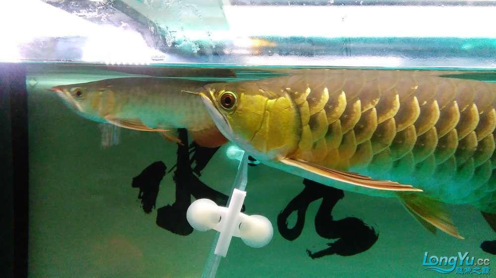 西宁最大的水产市场混养的乐趣 西宁龙鱼论坛 西宁龙鱼第3张
