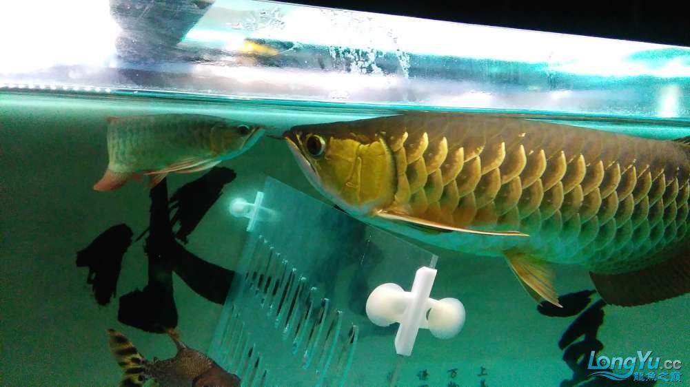 西宁最大的水产市场混养的乐趣 西宁龙鱼论坛 西宁龙鱼第4张