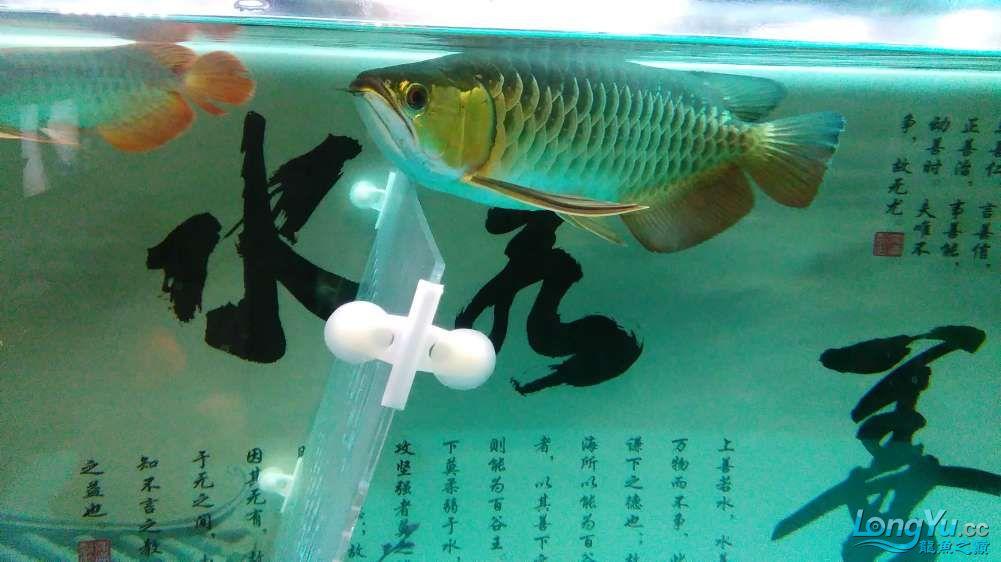 西宁最大的水产市场混养的乐趣 西宁龙鱼论坛 西宁龙鱼第5张