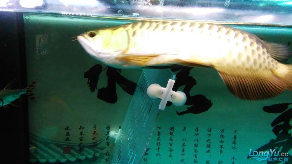 西宁最大的水产市场混养的乐趣 西宁龙鱼论坛 西宁龙鱼第7张