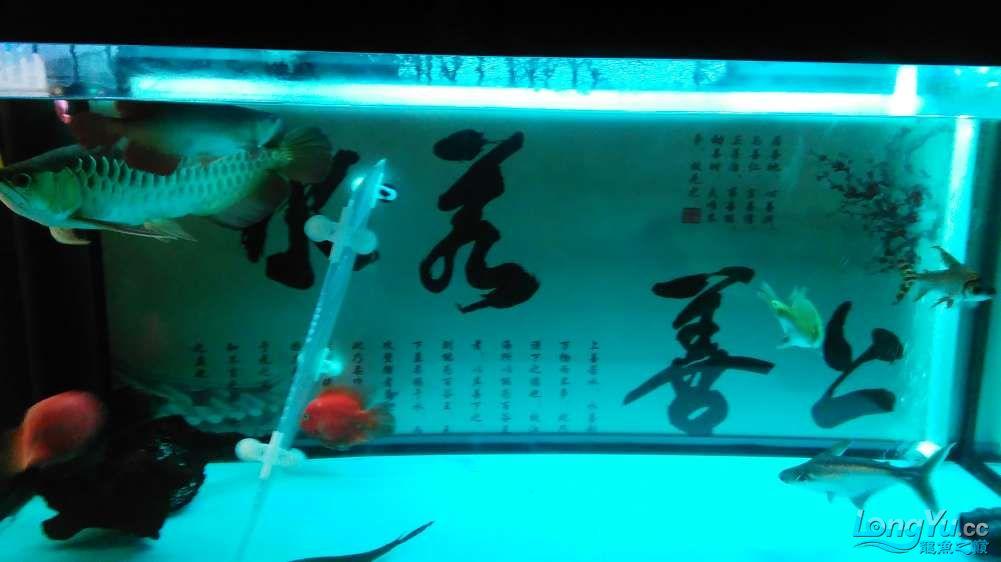 西宁最大的水产市场混养的乐趣 西宁龙鱼论坛 西宁龙鱼第13张