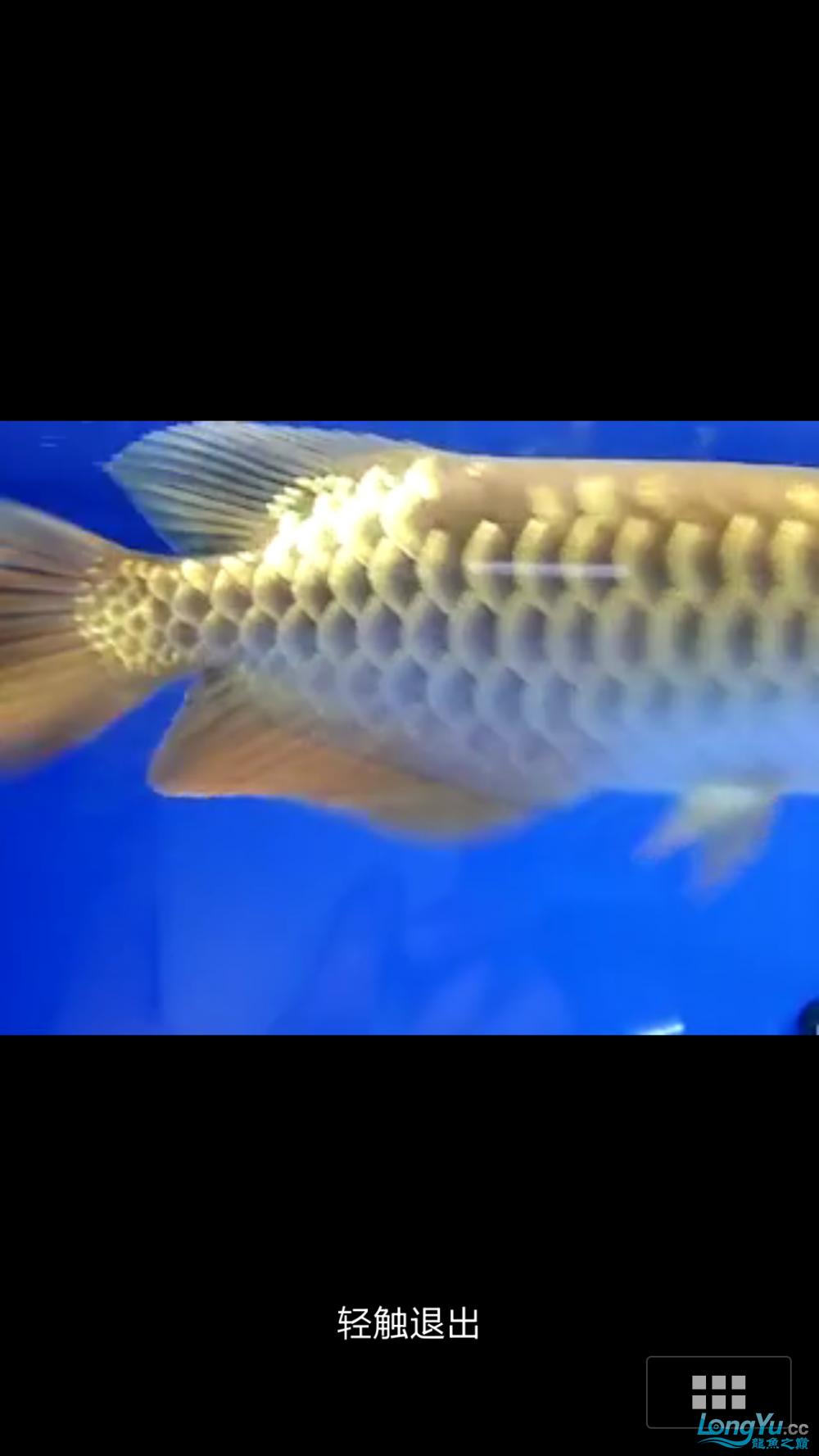 求高手给看看是不是过背! 西安水族批发市场 西安龙鱼第1张