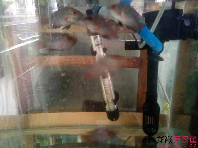 西安那个地方水族馆各位大神 帮忙看下这是什么罗