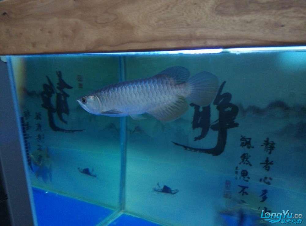 江门水族市场越来越金了欣喜啊 龙鱼论坛 祥龙水族联盟第2张