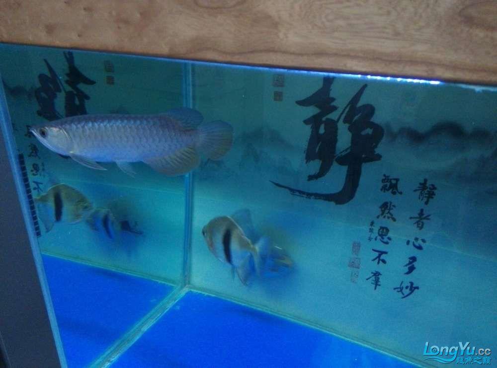 江门水族市场越来越金了欣喜啊 龙鱼论坛 祥龙水族联盟第3张