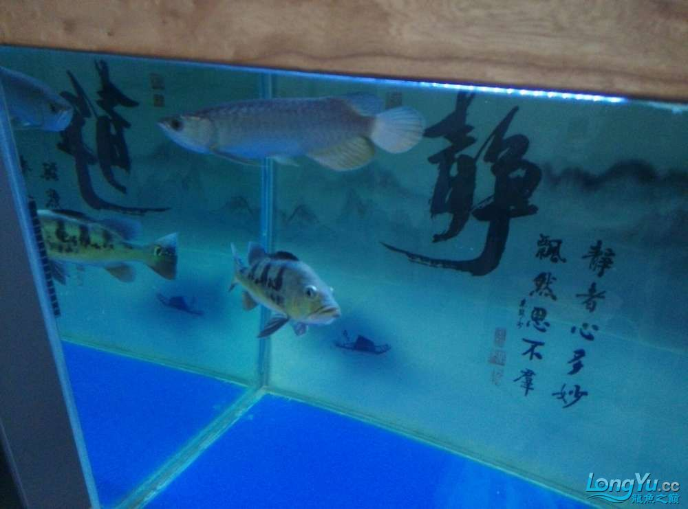 江门水族市场越来越金了欣喜啊 龙鱼论坛 祥龙水族联盟第5张