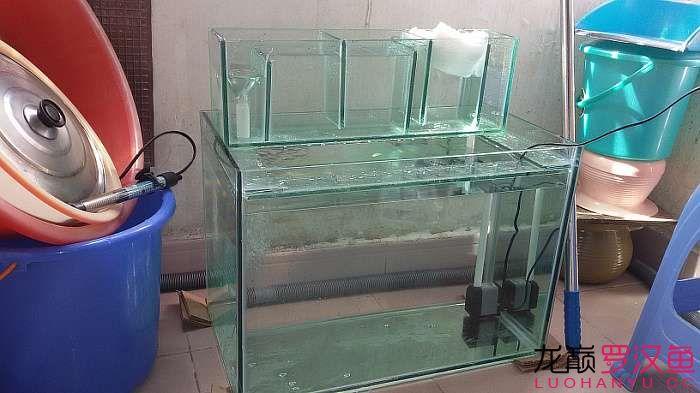 烟台哪个水族店卖银龙折腾得够够的 烟台龙鱼论坛 烟台龙鱼第5张
