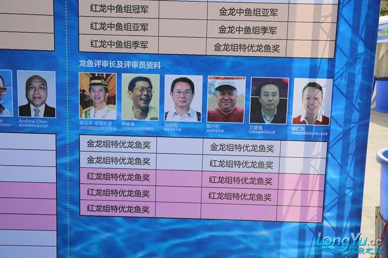 首届亚太龙鱼大赛2015年11月27日由中山广播电视台和在中山 烟台观赏鱼 烟台龙鱼第2张