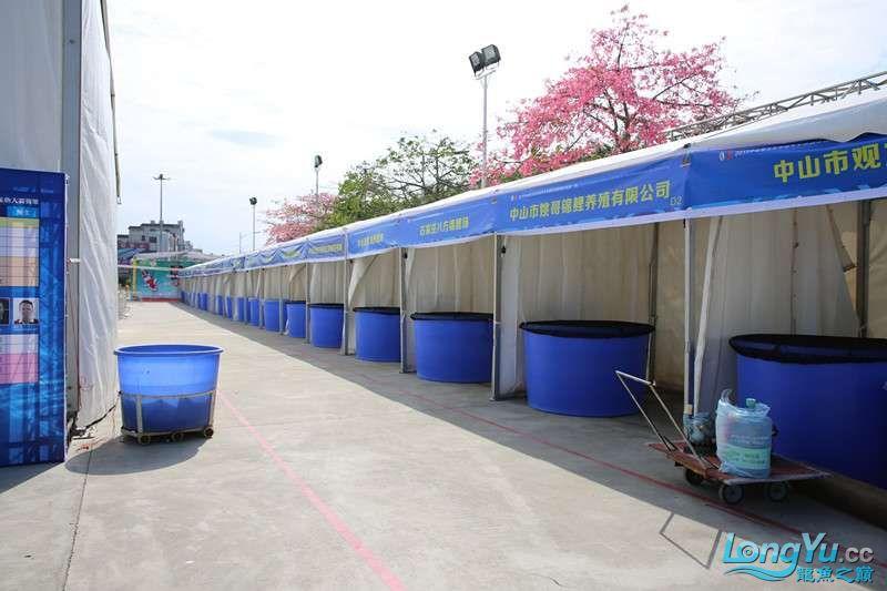 首届亚太龙鱼大赛2015年11月27日由中山广播电视台和在中山 烟台观赏鱼 烟台龙鱼第3张