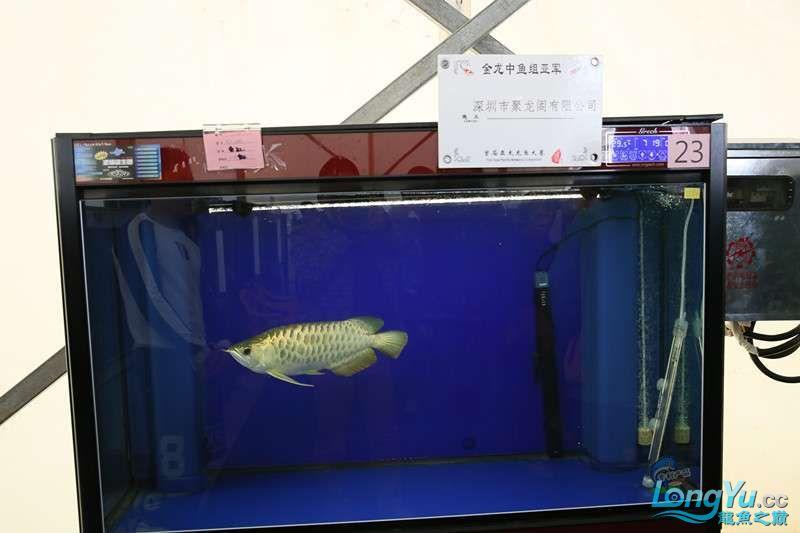 首届亚太龙鱼大赛2015年11月27日由中山广播电视台和在中山 烟台观赏鱼 烟台龙鱼第5张