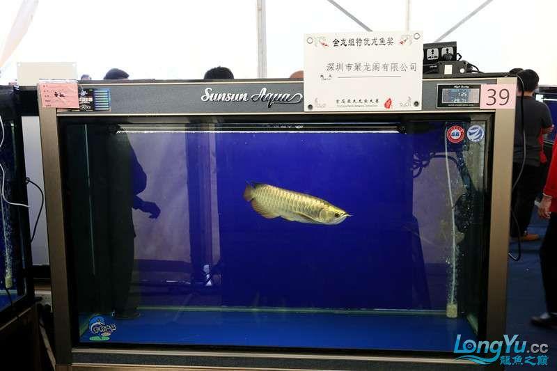 首届亚太龙鱼大赛2015年11月27日由中山广播电视台和在中山 烟台观赏鱼 烟台龙鱼第10张