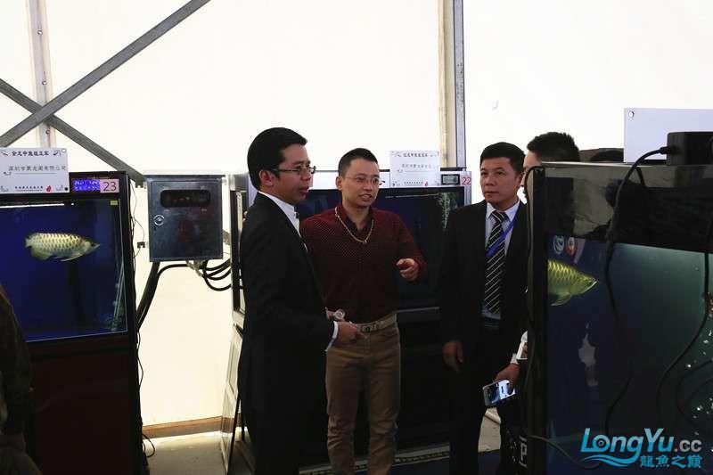 首届亚太龙鱼大赛2015年11月27日由中山广播电视台和在中山 烟台观赏鱼 烟台龙鱼第13张