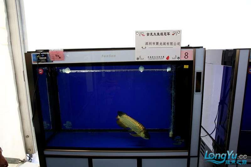 首届亚太龙鱼大赛2015年11月27日由中山广播电视台和在中山 烟台观赏鱼 烟台龙鱼第16张