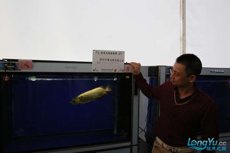 首届亚太龙鱼大赛2015年11月27日由中山广播电视台和在中山 烟台观赏鱼 烟台龙鱼第19张