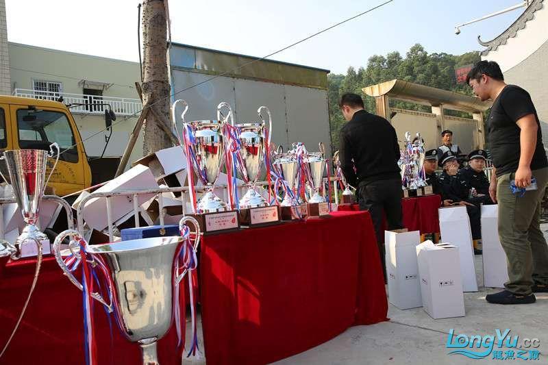首届亚太龙鱼大赛2015年11月27日由中山广播电视台和在中山 烟台观赏鱼 烟台龙鱼第21张