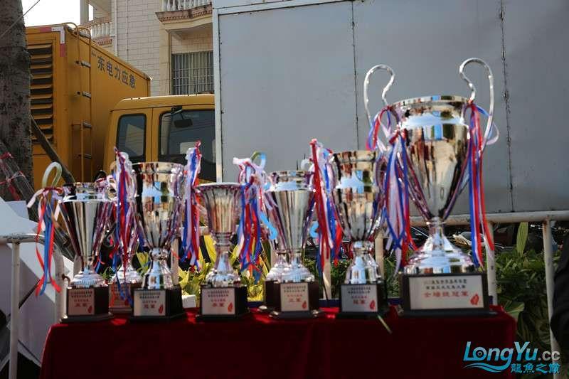首届亚太龙鱼大赛2015年11月27日由中山广播电视台和在中山 烟台观赏鱼 烟台龙鱼第22张