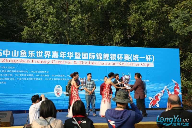 首届亚太龙鱼大赛2015年11月27日由中山广播电视台和在中山 烟台观赏鱼 烟台龙鱼第23张