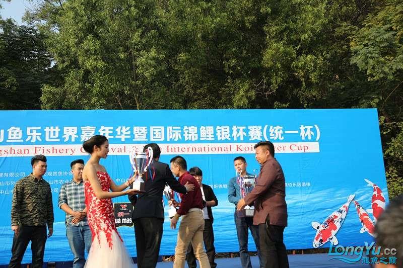 首届亚太龙鱼大赛2015年11月27日由中山广播电视台和在中山 烟台观赏鱼 烟台龙鱼第26张