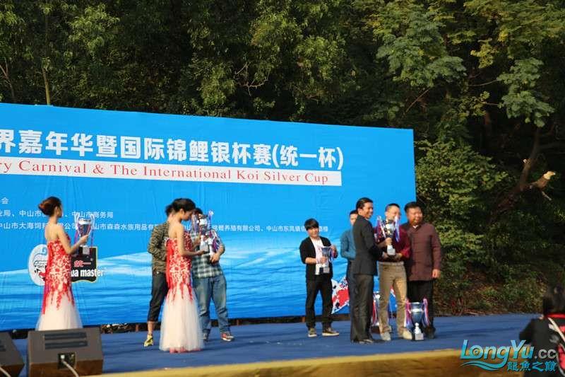 首届亚太龙鱼大赛2015年11月27日由中山广播电视台和在中山 烟台观赏鱼 烟台龙鱼第28张