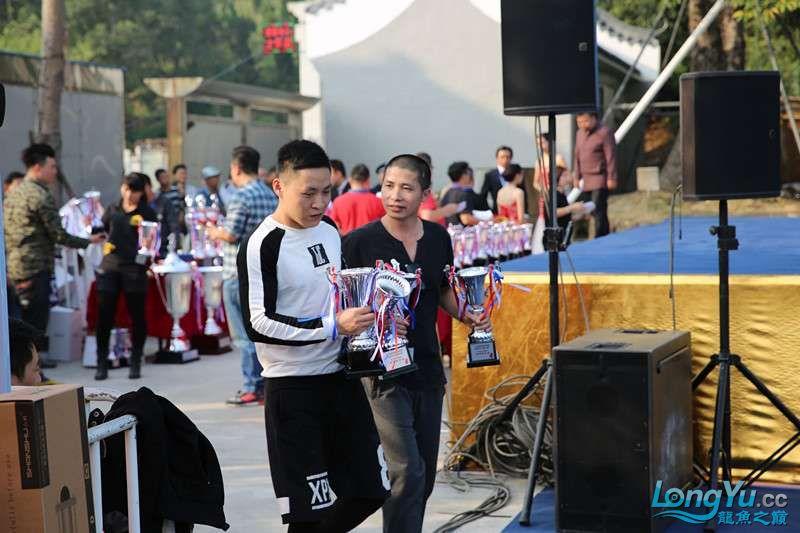 首届亚太龙鱼大赛2015年11月27日由中山广播电视台和在中山 烟台观赏鱼 烟台龙鱼第37张
