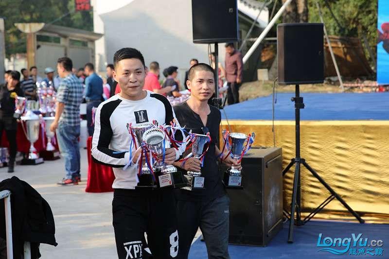 首届亚太龙鱼大赛2015年11月27日由中山广播电视台和在中山 烟台观赏鱼 烟台龙鱼第38张