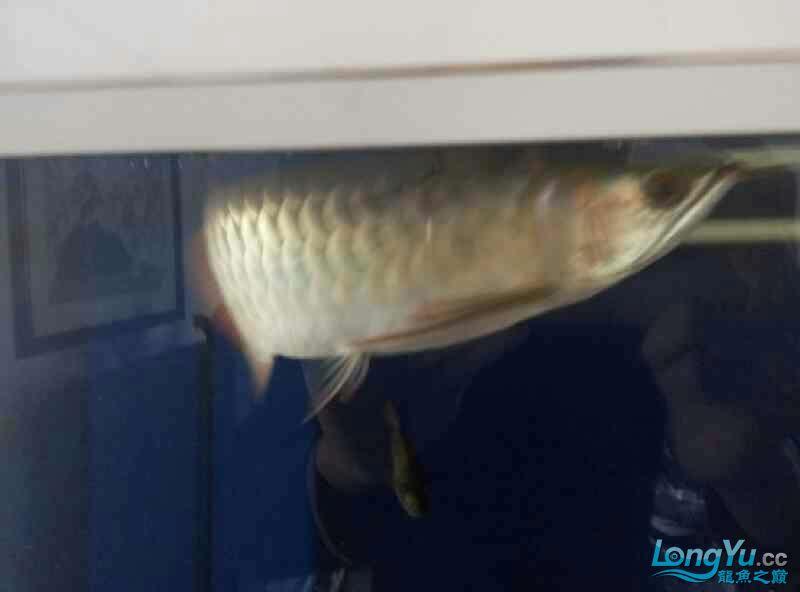 老师们来参观 西安水族批发市场 西安龙鱼第4张